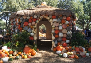 North Texas Ramblings Pumpkin Village Dallas Arboretum